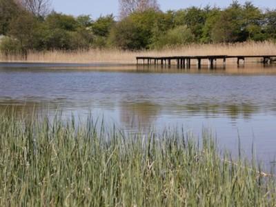 Jezioro Marszewo 8