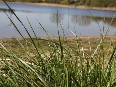 Jezioro Marszewo 10