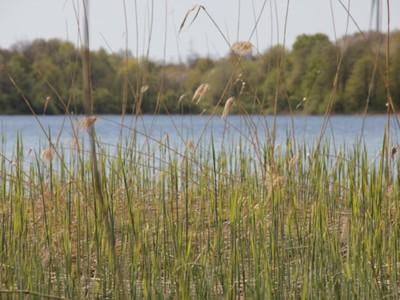 Jezioro Marszewo 7