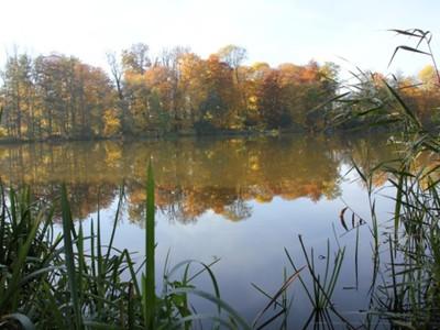 Jezioro Pieńkowo 2