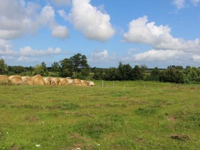 pole i łąka