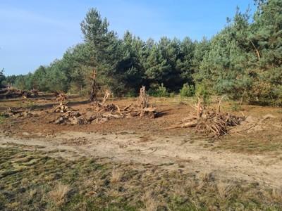 karczowanie lasu w miejscowości Moczalec