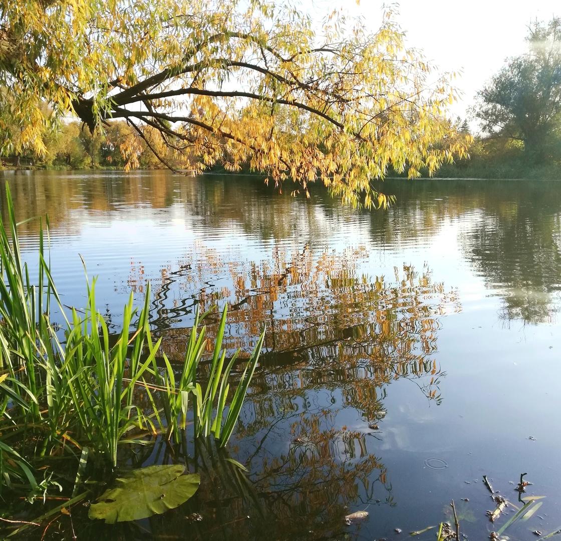 Jezioro Czerskie [1500x1447]