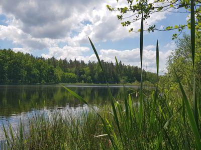 Zdjęcie przedstawia Jezioro w Pękaninie z otaczającymi je lasami.