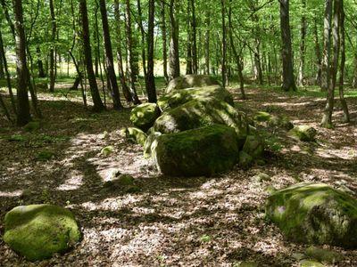 Zdjęcie przedstawia megality w Borkowie otoczone lasem.