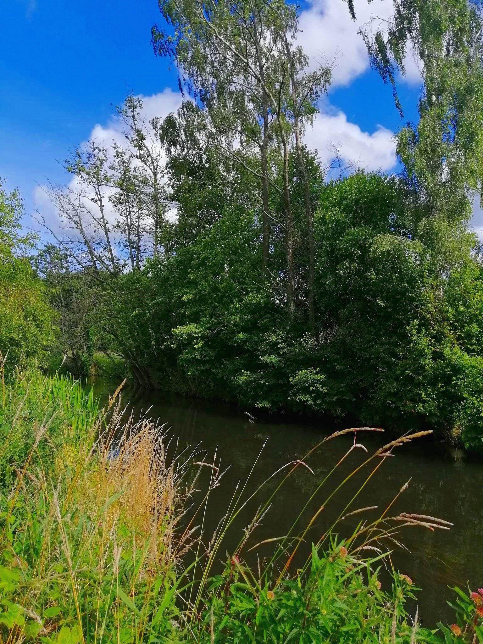 Zdjęcie przedstawia rzekę Grabową w okolicy Święcianowa.