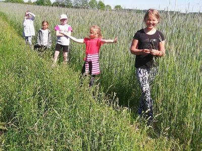 Zdjęcie przedstawia dzieci z Placówki Wsparcia Dziennego w Sulechowie spacerujące po polu podczas zajęć przyrodniczych.