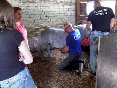Zdjęcie przedstawia wychowanków Placówki Wsparcia Dziennego w Paprotach obserwujących kowala, podkuwającego konia.