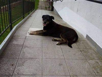 Zdjęcie przedstawia psa, który błąkał się w Karwicach.