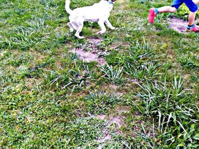 Zdjęcie przedstawia znalezionego w Podgórkach psa, biegającego po trawie.