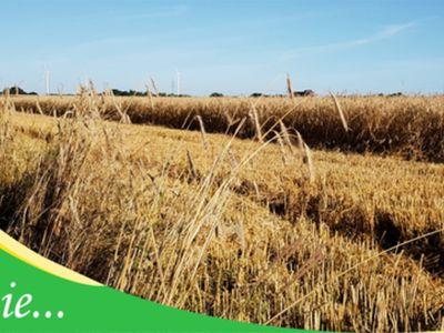 Zdjęcie przedstawia łany zbóż, częściowo skoszone i napis Lato w Gminie.