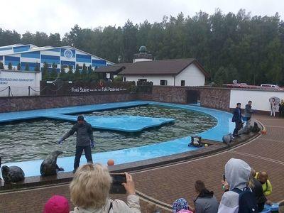 Zdjęcie przedstawia trenerów karmiących foki w Sea Parku.