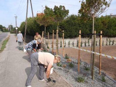 Zdjęcie przedstawia panie z Klubu Seniora w Ostrowcu sprzątające teren przy Domu Wiejskim w Ostrowcu.