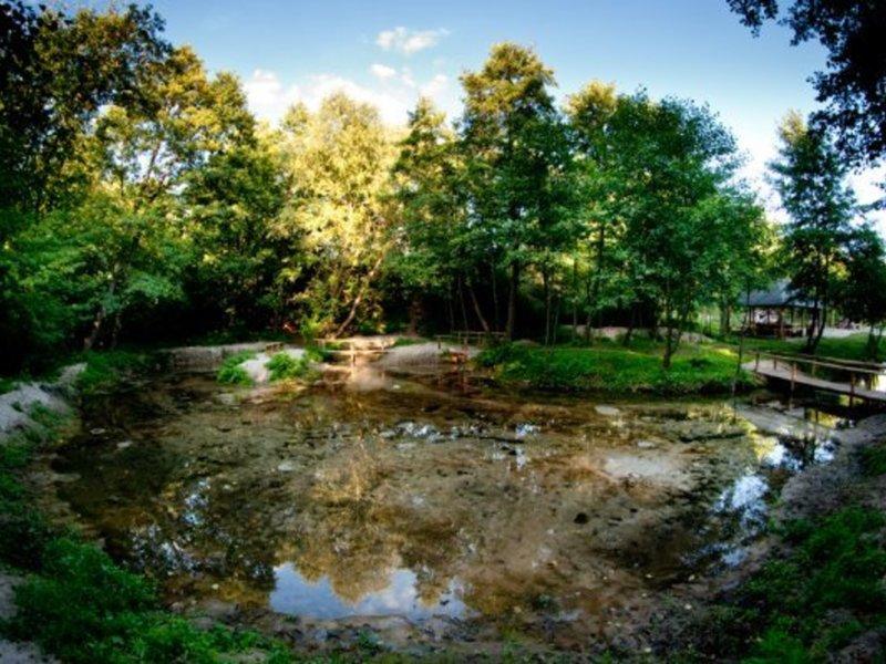 Zdjęcie przedstawia źródła w korycie rzeki