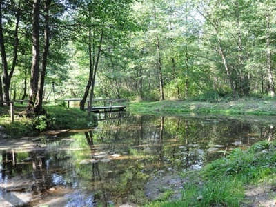 Bijące źródła pod rzeką Tuczyn oraz drzewa na brzegach rzeki
