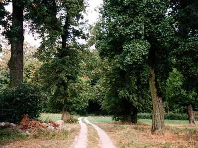 Zabytkowy park dworski