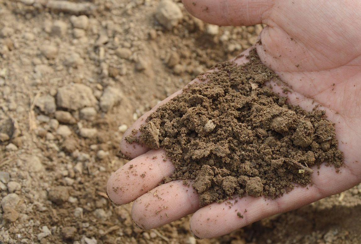 Badanie próbek glebowych